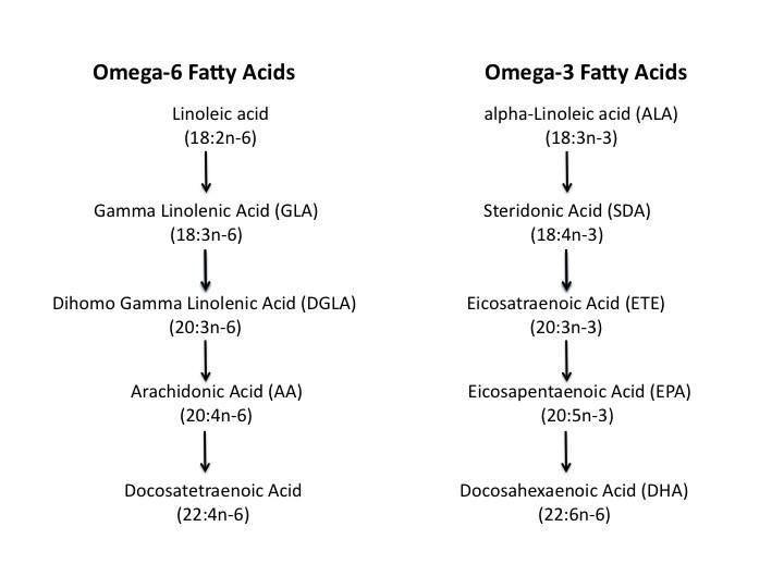 Omega3 and omega6 pathways